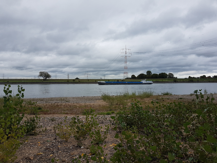 Rheinufer mit Schiff