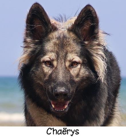 Chaërys des Loups du Nideck