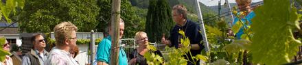 Weinbergswanderung mit einem Winzer von der Ahr durch die Weinberge in Ahrweiler mit Weinprobe.