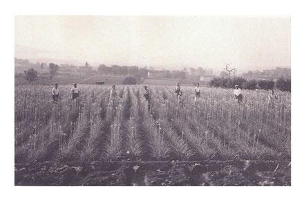 1936 Ma Famille
