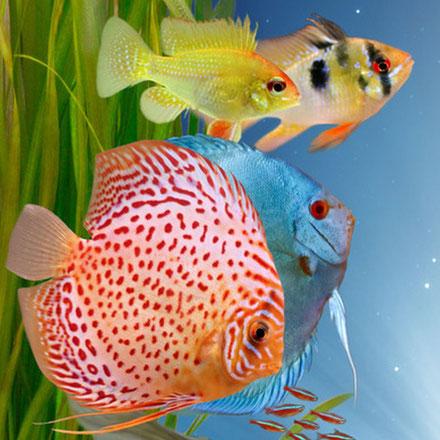Zierfische aquarium wien benno david og for Zierfische barsch