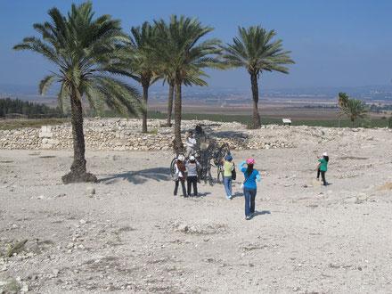 Финиковые пальмы, выросшие из косточек, оставленных археологами.
