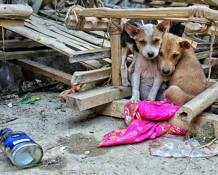 Homeless animals / dogs in Nicaragua