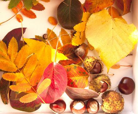 Herbstblätter_Schreibmeditation Achtsamkeit