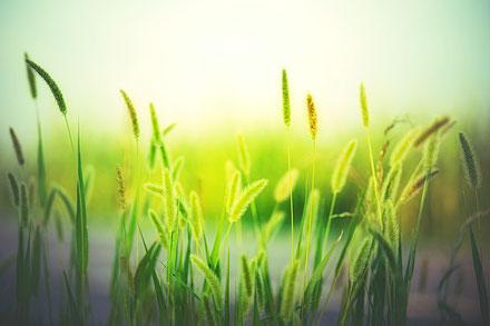 Alles wächst und gedeiht grün Wachstum
