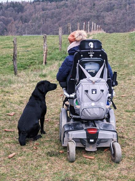 schwarze Labradorhündin Hazel auf der Wiese neben Rollstuhl mit Nina Hoffmann im Winter neben einem Zaun