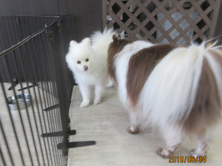 犬の保育園Baby・犬・犬のしつけ・犬の社会化・ペットホテル