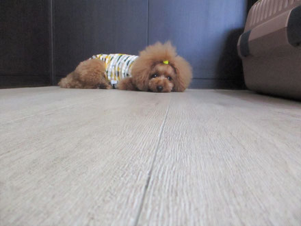 犬の保育園Baby・犬・犬のしつけ・犬の社会化・八千代市・習志野市・船橋市