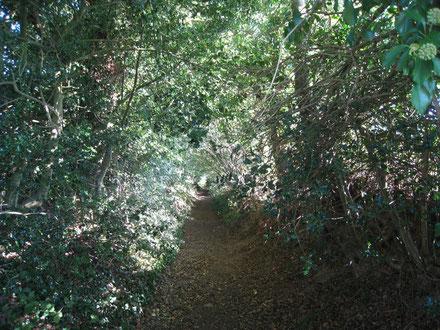 Le chemin creux de Penker-Lois, Landeleau.