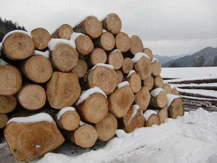 Tannenmondholz frisch vom Mondholzbauern