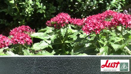 Die Beet- und Rasenkante von Lust Blechwaren sieht nicht nur gut aus, sie hilft auch, Wildkräuter aus dem Beet fern zu halten.