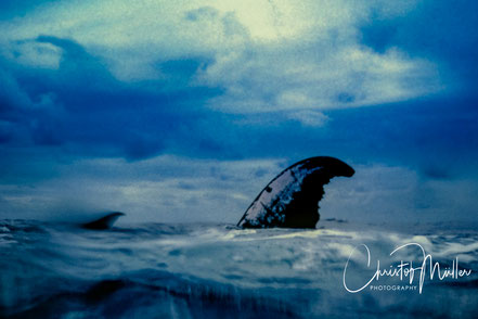 Giant sea mammal