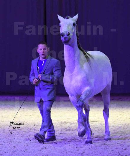 Ludovic LONGO & 1 cheval en liberté