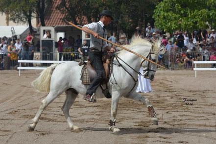 Démonstration d'équitation de travail CAMARGUAIS