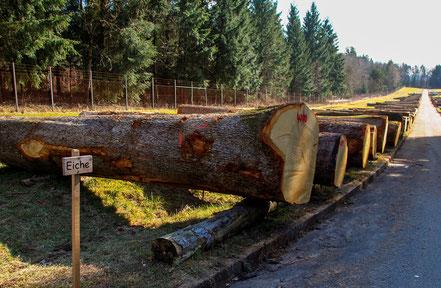 Holz - universeller Bio-Rohstoff  [© Foto: Dr. G. Strobel]