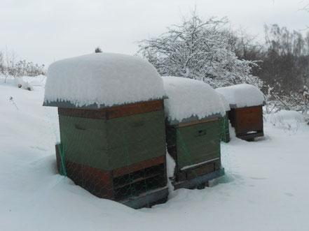 Meine Völker im tiefsten Winter
