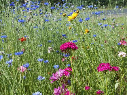 Bienenweide im Juni