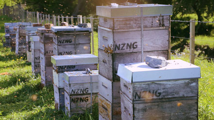 Beehives in Dunedin New Zealand owned by NZNG