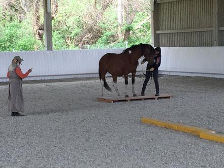 Tellington-methode Bodenarbeit mit Pferden