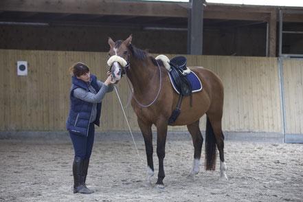 Körperarbeit am Pferd