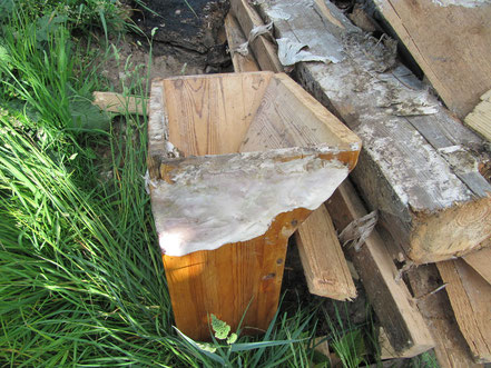 Schwammbefall am Holz