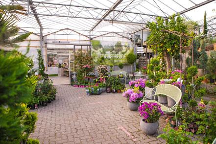 Gärtnerei für Blumen,Pflanzen,Bäume,Sträucher,Stauden im Raum Würzburg