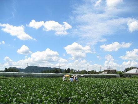 青空の下で農業体験の写真