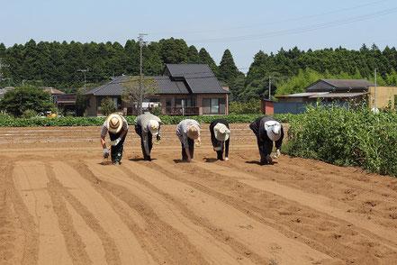 大豆の種まきを並んでしている人たちの写真