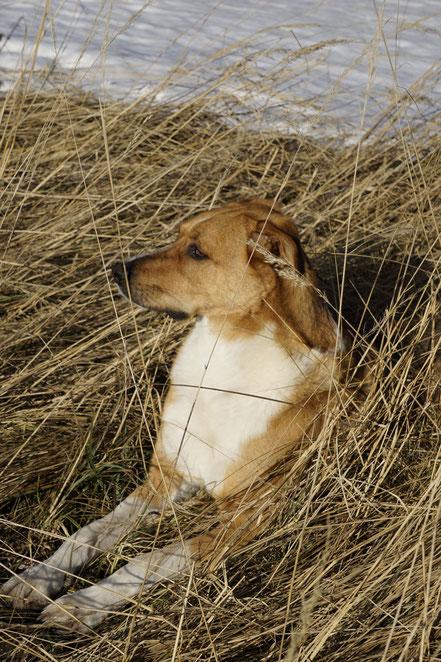 berghundtal,berg hund tal,wandern mit hund,almtal,salzkammergut,totes gebirge,kasberg,erfahrungsberichte,hunde blog,outdoor,blog,bergsteigen mit hund,hunde wanderführer,