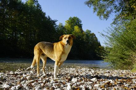 berg, hund,tal,berghundtal,berg hund tal, packesel,couscous,msr,sam,hund,berghund,outdoor,rezept