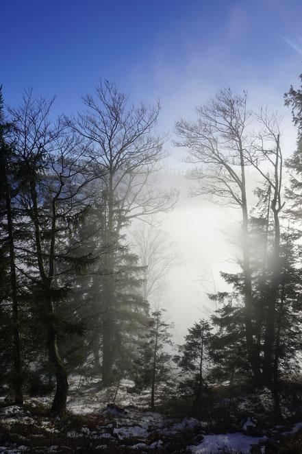 Berghundtal;berg+hund+tal;alpen;outdoorblog;testberichte;erfahrungsberichte;tourenberichte;totes gebirge;skitour;mtb;wandern;trekking;wandern+hund;inversion;winterstimmung;herbststimmung;hund;wald