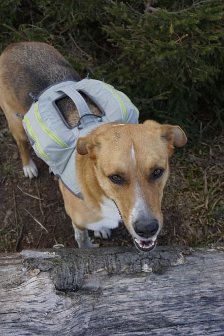 berghundtal, berg hund tal, wandern mit hund, testbericht, ruffwear, singletrak, packtaschen für hunde, hundegeschirr,outdoor hund,
