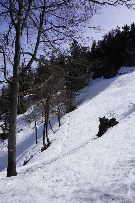 berghundtal, wandern mit hund, bergsteigen mit hund, alpen, salzkammergut, kremstal, bernhardiner,schäferhund, packtaschen für hund, trekking mit hund,