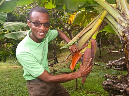 Kakao-Pflanzen