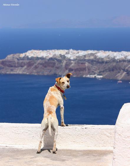 Vistas sobre Oia - Santorini - Grecia