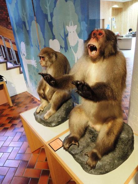 1階にいる本物並みの迫力があるお猿さん