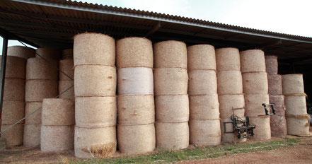 Hangar de stockage de paille et de foin pour les chèvres d'élevage en Deux-Sèvres