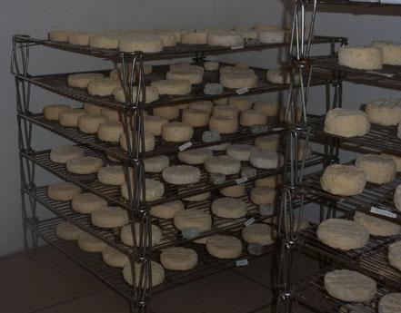 Les fromages qui s'affinent dans le hâloir de la Ferme de La Pérotonnerie de Rom.