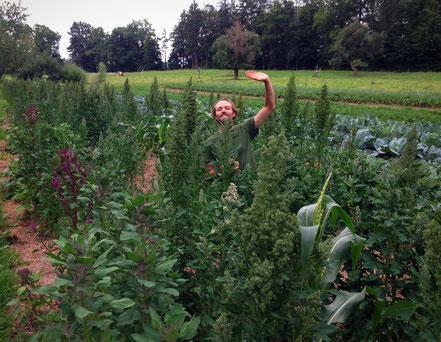 Samuel in seinem eigenen Versuchsfeld mit Quinoa