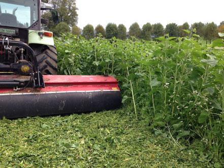 Mit dem Schlegelmulcher kann eine grosse Menge Pflanzenmasse  zerkleinert werden. Besonders wichtig wenn danach mit Zinken-, oder Scheibenschartechnik gesät werden soll. Für die Frässaat kann darauf verzichtet werden.
