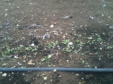 Der Boden im Frühjahr 2013. Allerlei Pionierpflanzen besiedeln den Boden.