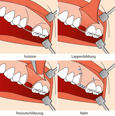 Zahnmedizinische Fachkunde