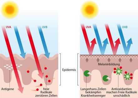 UV-Einwirkung auf die Haut
