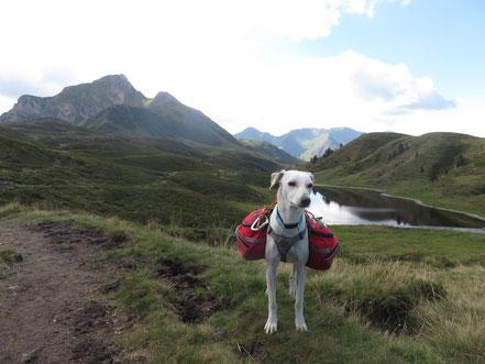 Klettergurt Für Hunde : Dogtrekking mountain dogs