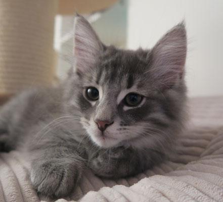 Leif, 11 semaines