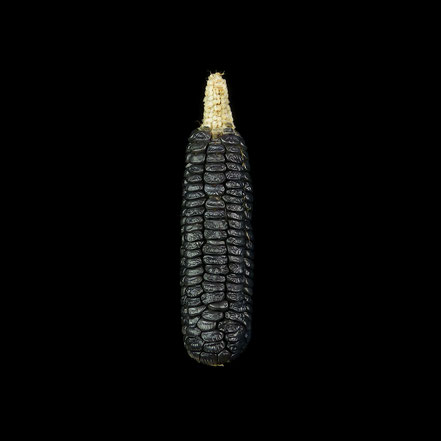 Black Aztec - maize - corn - Zuckermais