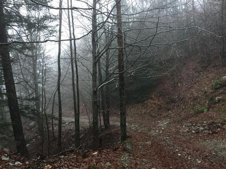 En altitude le brouillard s'est invité...