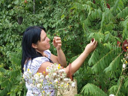 Minda Forcier de Anokian Nature Authentik Autochtone herboriste au Québec