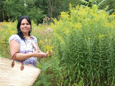 Minda Forcier de Anokian Nature Authentik Autochtone herboriste au Québec ceuille la verge d'or