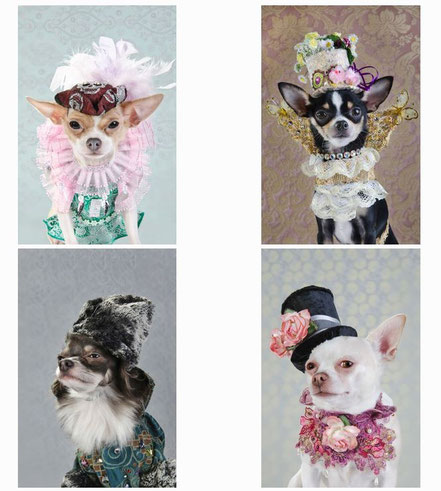Chi-Love.de | BLOG | Sophie Gamand | Dogvouge Serie